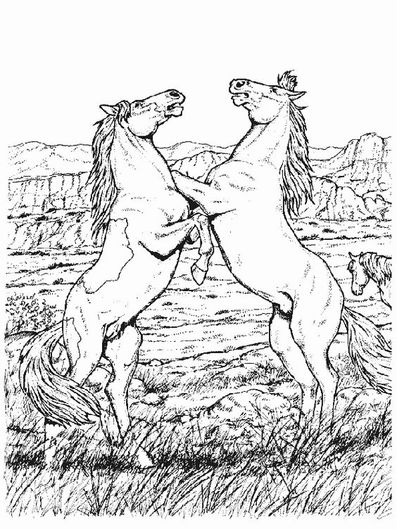 ausmalbilder pferde 25 - ausmalbilder für kinder