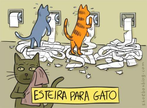 Esteira para gatos.