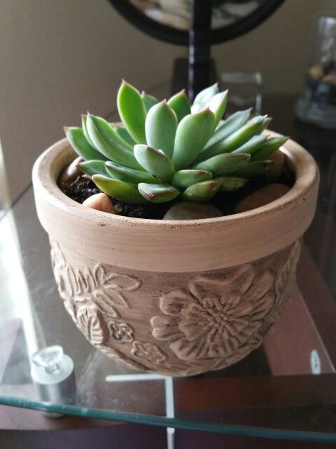 Succulent May 2015