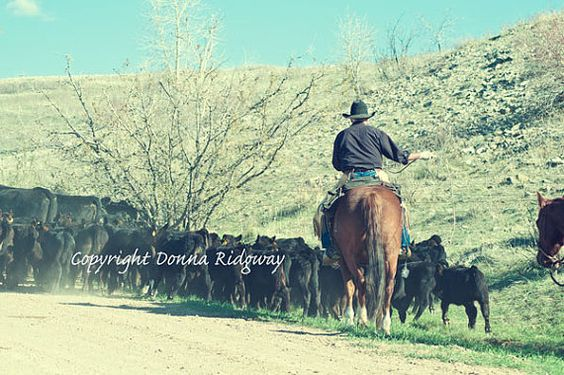 Cowboy photo equine photo digital download by NaturePhotosMontana, $9.99 Personal and limited commercial rights use.