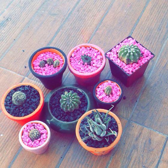 Mi pequeño jardín