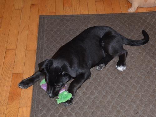 Adopt Mason On Dog Search Nearest Animal Shelter Pets