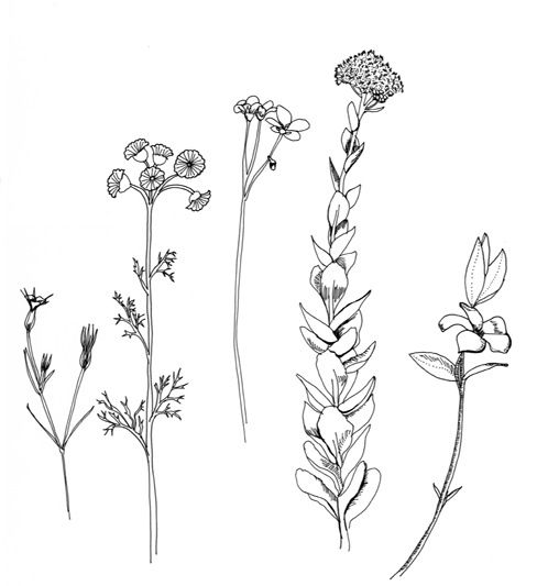 Flower drawing tumblr, Flower drawings and Images for flowers on ...