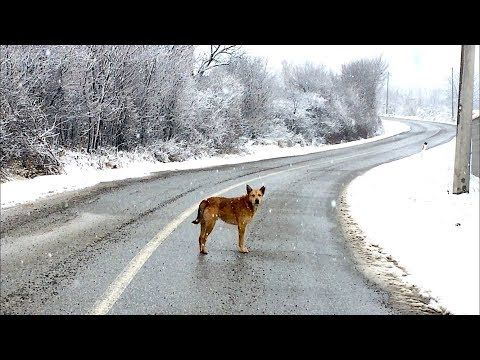 Snowy A Homeless Dog Wandering The Street Youtube With Images