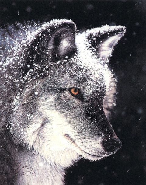 Pastel Wolf Painting - Wildlife Wolf Art by Roby Baer