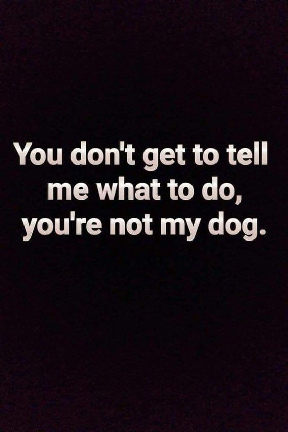 I see a lot of dogs that have trained the people... not always for the best!