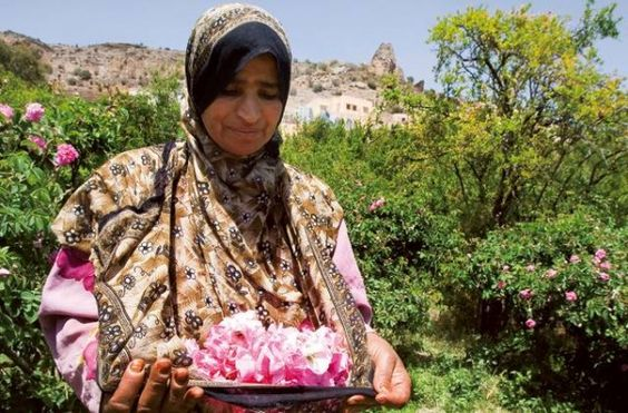 The rose harvest in Oman-01