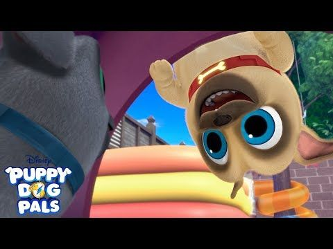 Bingo And Rolly S Favorite Music Videos Compilation Puppy Dog