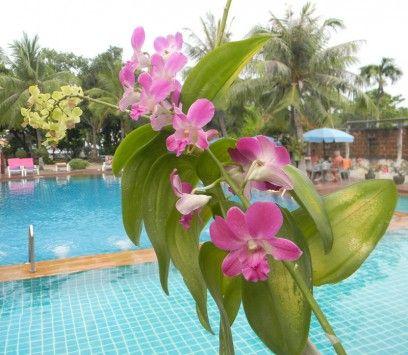 Flowers in Pattaya, Thailand