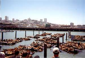 Pier 39 in San Francisco - noisy and smelly, but still beautiful!  Sea Lions everywhere!