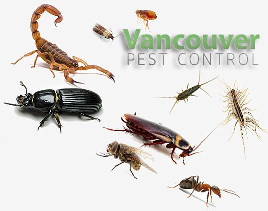 Know The Importance Of Pest Control Services In Vancouver Pest Control Services Pest Control Pests