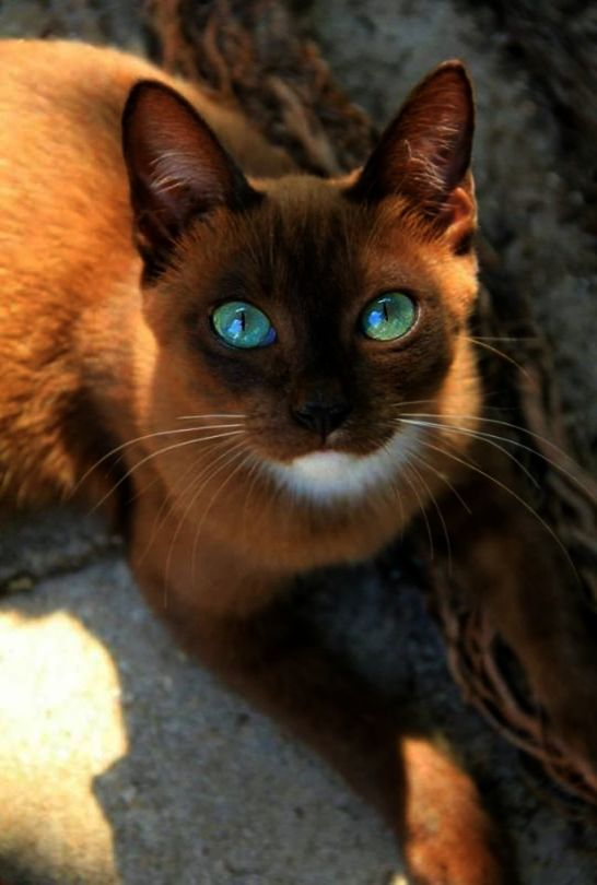 Excellent Beautiful Cats For Sale In London Facebook Gatos
