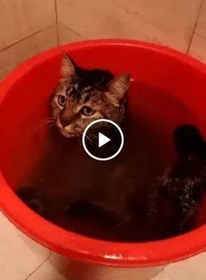 mata a sede e refrescar o calor ao mesmo tempo