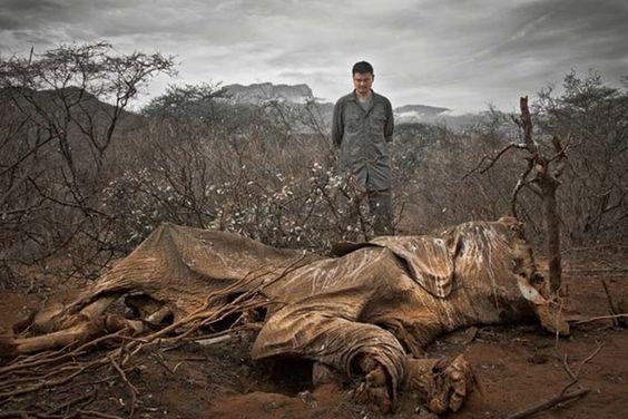 Imagens que mostram que o nosso planeta está pedindo socorro | Panorama Eco