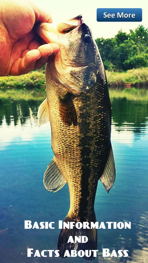 basic information and facts about bass #fishing #bass #tips | bass, Soft Baits