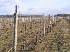 how to make a vineyard trellis - Google Search