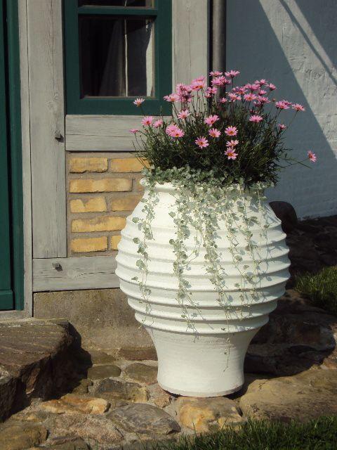Weiss gekalkte kretische Amphore, bepflanzt
