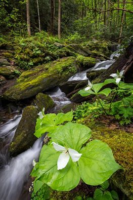 We are loving the spring flowers in the Smoky Mountains!