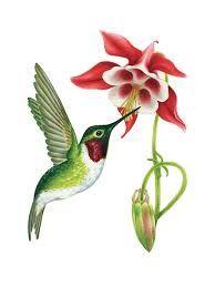 Resultado de imagem para hummingbirds drawings in color