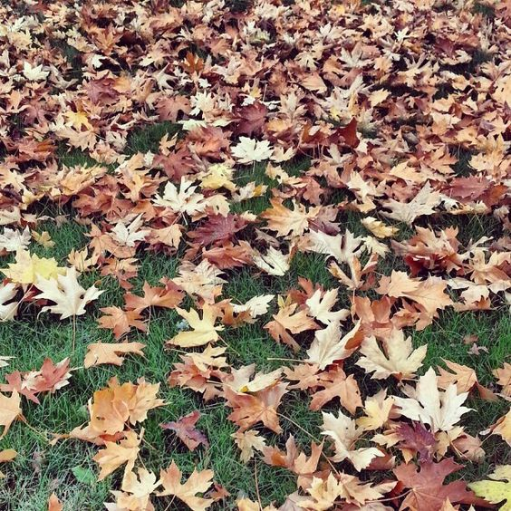 Leaves of fall!! Love all the colors!!