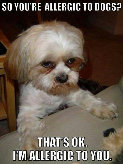 25 Pics Funny Dog Memes To Cheer You Up On A Bad Day Lovely Animals World Dogmemes Funny Dog Memes Dog Quotes Funny Funny Dogs