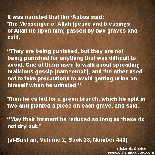 Backbiting In Islam Essay Prompts - image 3