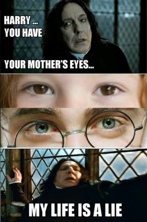 Harry You Have Your Mother Harry Potter Jokes Harry Potter Memes Harry Potter Funny