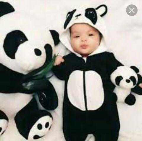 صور باندا Baby Panda Panda Nursery Panda Costumes