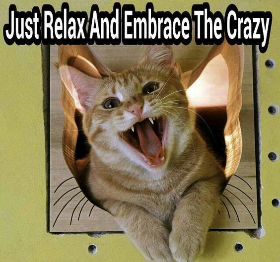 Kitty advice