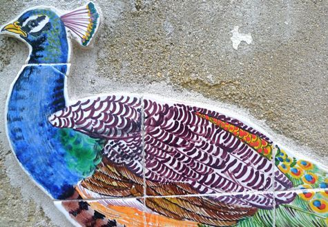 azulejos peacocktiles