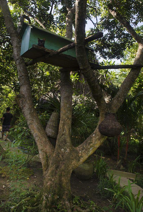 Vietnam Treehouse Part - 17: Kitten Treehouse   Cho Lach, Vietnam.
