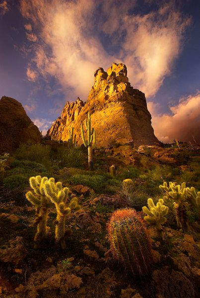 Saguaro, Barrel and Cholla Cactus in Arizona's Superstition Mountains.