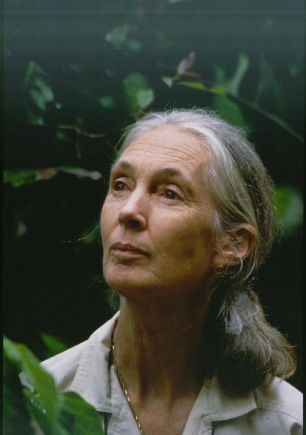 Jane Goodall, to this day, is the only human ever to be accepted into chimpanzee society. She is best known for her 45-year study of social and family interactions of wild chimpanzees in Gombe Stream National Park, Tanzania.