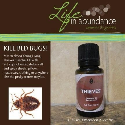 Bed Bugs Total Healthy Living Pinterest Beds And