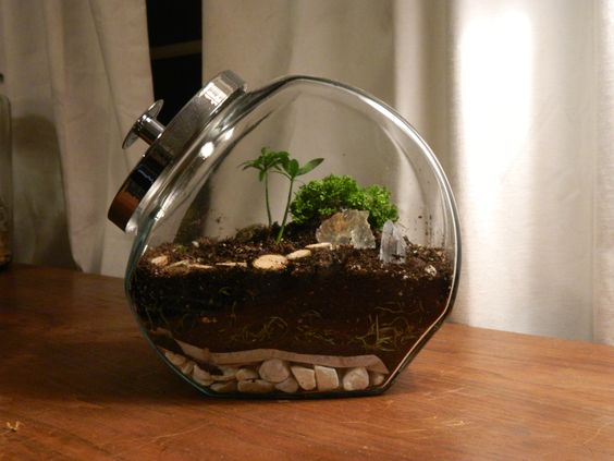 terrrarium created using directions from http://terrariumwise.com/?p=70