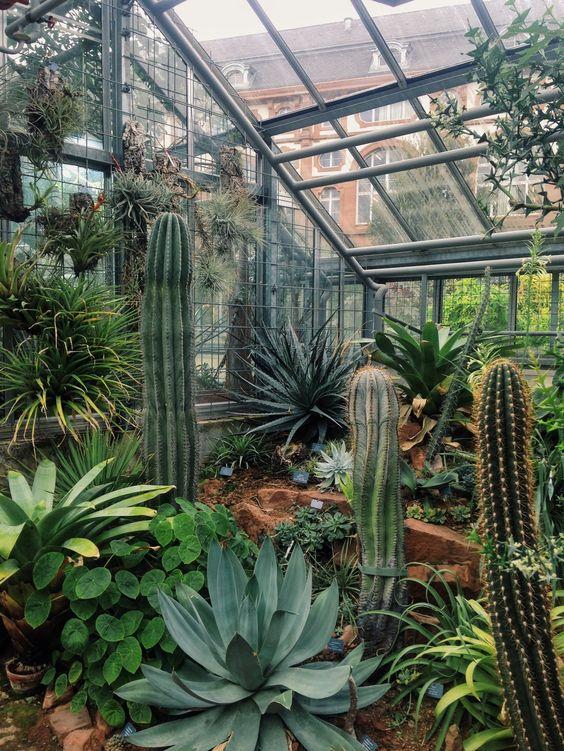 Botanischer Garten der Universität Basel, Switzerland | Zhu Ohmu