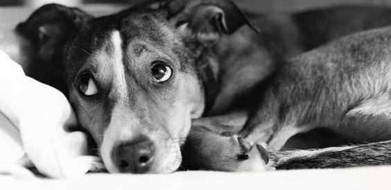 Medo de fogos de artifício de cães e gatos pode ser minimizado - 17/12/2015 - UOL Estilo de vida