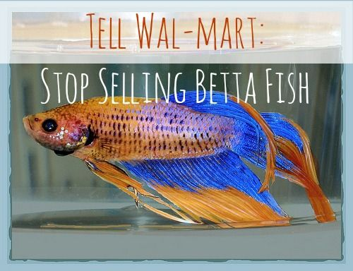 Tell wal mart stop selling betta fish one petitioner for How much are betta fish at walmart