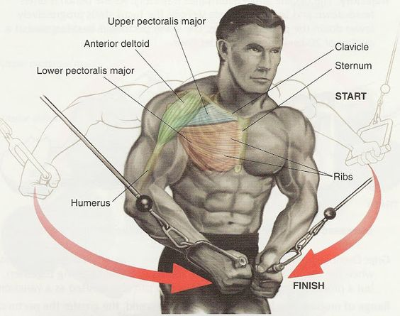 Pectoral Exercises for Chest Workout