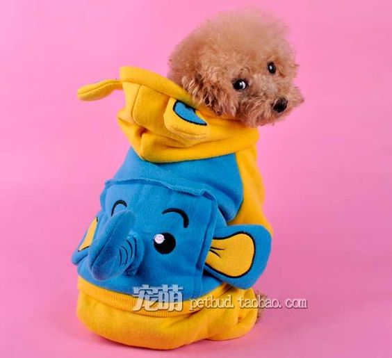 Hot Deals for Pet Shop Owners: Dog Clothes for Winter