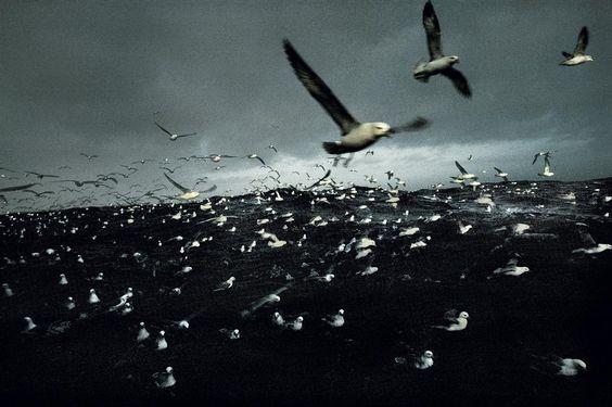 Islandia-Harry Gruyaert