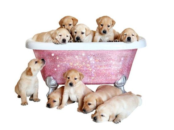 Want this pink swarovski diamond bathtub!