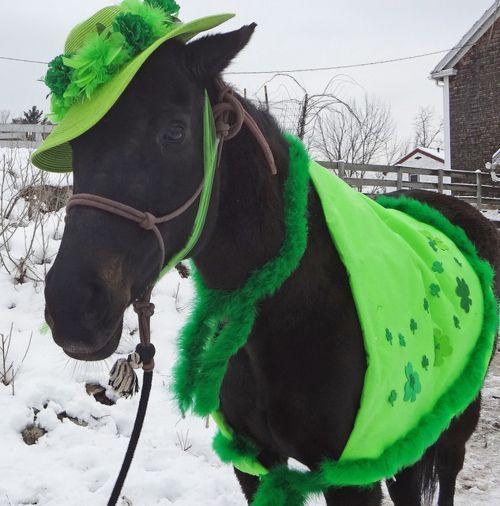 Fabulous St. Patricks day horse.