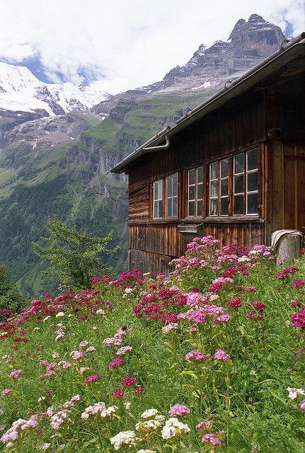 Berg-Blumenwiese | #lyoness | Jetzt besuchen: https://www.lyoness.com/at/branche/travel