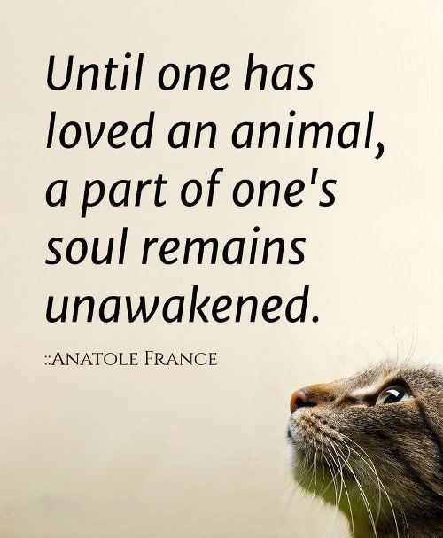 Love Animal Quotes Adorable 10 Amazing Quotes About Animals And Love  Animal Cat And Dog