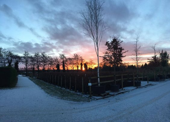 Sunrise over the nursery...