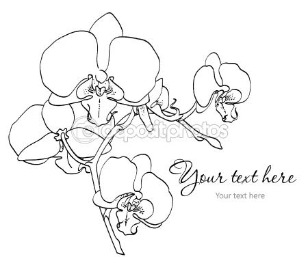 Orchid Outline Drawing Images amp Pictures Becuo