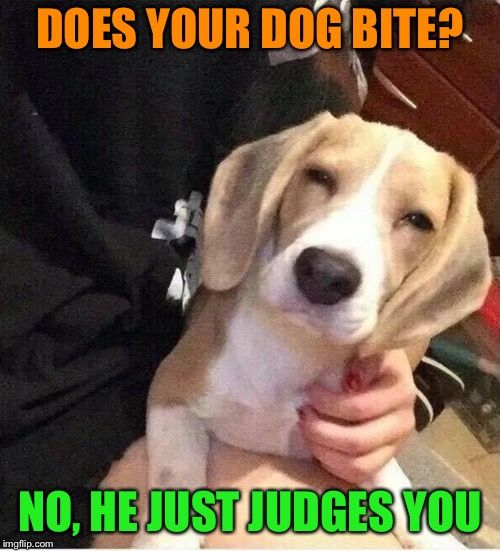 Puppy Jokes Image By Dogtreatmentpro On 300 Top Funny Dogs Memes
