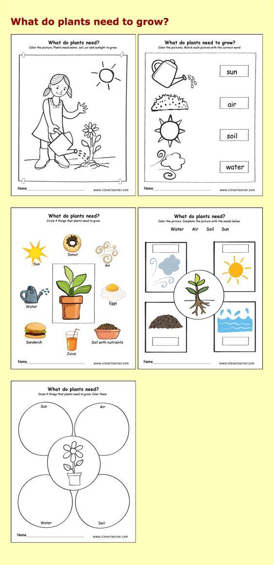 needs of plants kindergarten worksheets preschool. Black Bedroom Furniture Sets. Home Design Ideas