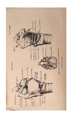 Human osteology: comprising a description of th...